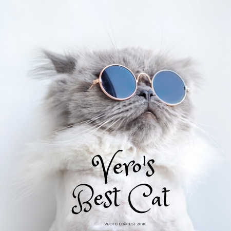 Best Cat Photo Contest