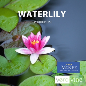 Waterlily Photo Contest